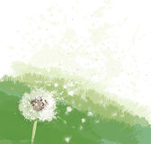 Vector white dandelion on spring background. Royalty Free Stock Photography