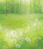 Vector white  dandelions on forest background. White dandelions flowers on green forest background, springtime Royalty Free Stock Images
