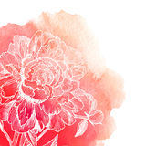 Vector white ink drawn peony on red watercolor Stock Photos