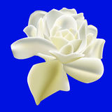Vector of White Rose Royalty Free Stock Photography