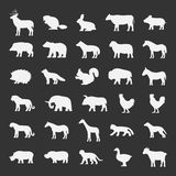 Vector white silhouettes of animals on a black background. Stock Photos
