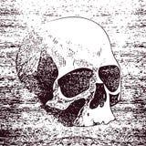 Vector white skull on black background in grunge Royalty Free Stock Image