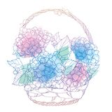 Vector wicker basket with bouquet of outline Hydrangea or Hortensia flower bunch and leaves in pastel blue and pink isolated. Vector wicker basket with bouquet vector illustration
