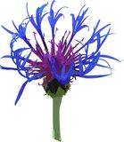 Vector wild blue flower. Stock Photo