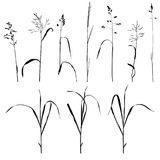 Vector wild cereal plants Stock Images