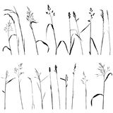 Vector wild cereal plants Stock Photos
