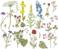 Vector wild floral collection Stock Photo