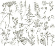 Vector wild floral collection Royalty Free Stock Images