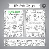 Herbs and Wild Flowers. Hand drawn herbal design with spices, medicinal, cosmetic plants. Illustration for beauty store. Vector wild flowers and herbs banners Stock Photo