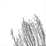 Vector wild herbs Stock Photo