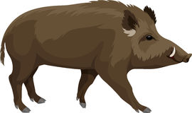 Vector wild hog boar mascot Royalty Free Stock Image