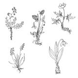 Vector wild plants with roots Stock Photo