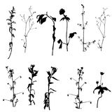 Vector wild plants silhouettes Stock Photography