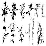 Vector wild plants silhouettes Royalty Free Stock Image