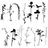 Vector wild plants silhouettes Stock Photo