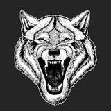 Vector wilden Wolf für Tätowierung, T-Shirt, Sportlogo vektor abbildung