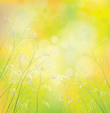 Vector wildflowers background. Stock Photography