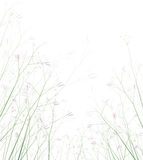 Vector wildflowers isolated. Royalty Free Stock Image