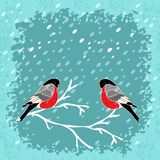 Vector winter background with bullfinch bird Royalty Free Stock Photography