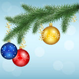 Vector winter background with snowflakes and pine branches Royalty Free Stock Photo
