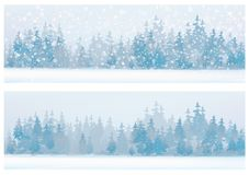 Vector  winter  forest background. Stock Photo