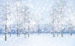 Vector winter snow landscape. Stock Photos