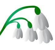 Vector witte bloemenachtergrond Stock Afbeelding