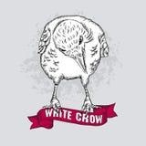 Vector witte kraai Royalty-vrije Stock Afbeelding