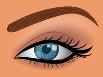 Vector woman blue eye. Illustration Royalty Free Stock Photos