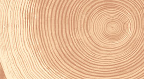 Vector wood texture of wavy ring pattern from a slice of tree. Grayscale wooden stump isolated on white. Stock Image