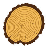 Vector wooden cut of a tree log. With concentric rings and bark Royalty Free Stock Images
