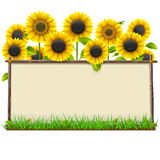 Vector Wooden Frame with Sunflowers Royalty Free Stock Image