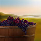 Vat with grapes. Vector wooden vat of red grapes for wine in valley on background stock illustration