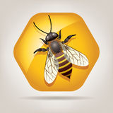Vector working bee on honeycell Stock Photos