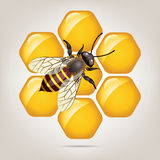 vector working bee on honeycells Stock Image