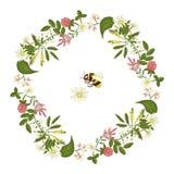 Vector wreath of acacia, heather, camomile, buckwheat royalty free illustration
