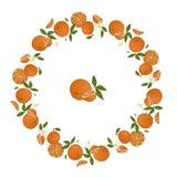 Vector wreath of oranges vector illustration