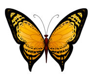 Vector yellow butterfly Stock Images