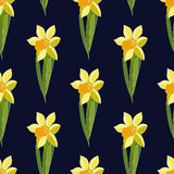 Vector Yellow daffodil flowers on dark background. Seamless floral pattern with narcissus flowers. Fashion style for prints, silk Royalty Free Stock Images