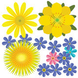 Vector yellow flowers Stock Photography
