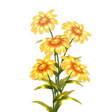 Vector yellow flowers Royalty Free Stock Photography