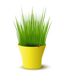 Vector yellow pot with green grass Stock Photos
