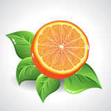 Vector yummy orange on white background with green. Leaves Stock Photography