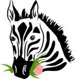Vector zebra eating grass Stock Photography
