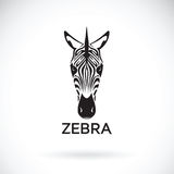 Vector of an zebra face on white background. Animals. Vector of an zebra face on white background. Wild Animals Royalty Free Stock Photography
