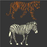 Vector zebra and tiger Royalty Free Stock Photo