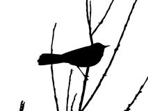 Vector Zeichnungsvogel Lizenzfreies Stockbild