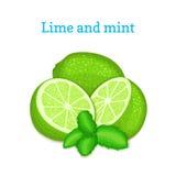 Vector Zusammensetzung einer Zitrusfruchtkalkfrucht und der tadellosen Blätter Grün kalkt ganzes und Schnitt Gruppe von geschmack Stockbild