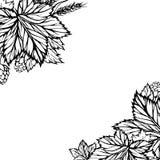 Vector zwart-witte achtergrond met hop Stock Foto's