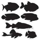 Vector zwarte silhouetten van vissen Geplaatste de pictogrammen van vissen Stock Foto's